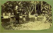 Osip Ge (?) in the apiary. Ivanovsky farm. 1880s