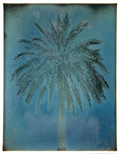 Girault de Prangey (French, 1804–1892). Palm Tree near the Church of Saints Theodore, Athens (89. Athènes. 1842. Palmier près S Théodore.), 1842