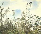 A Thistle against Blue Sky. Olshanka. End of 1870s - early 1880s