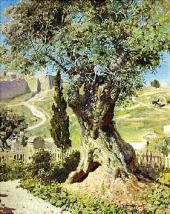 Olive Tree in Gethsemane. 1882