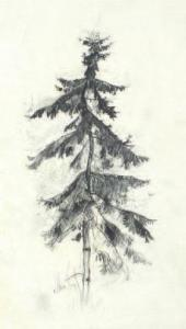 FIR TREE. THE END OF 1880s