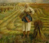 Flax Harvest. 1977