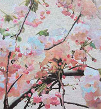 "The Cherry Orchard"" on the Arbat"