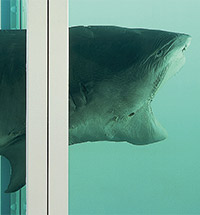 DAMIEN HIRST. MASTER OF HIS - OWN DESTINY