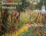 November with Hillwood: New Virtual Programs