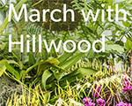March with Hillwood: Reopening and Virtual Programs