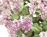Exclusive Member Hours for The Porcelain Flowers of Vladimir Kanevsky | Hillwood